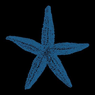les-toiles-de-mer-chambres-dhotes-locmariaquer-étoilesdemer-2